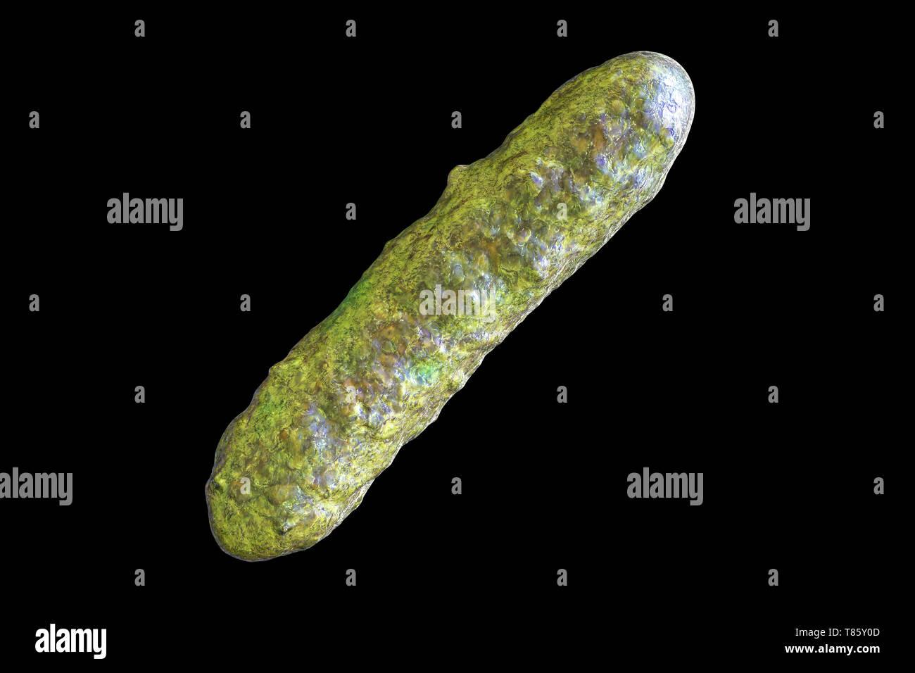 Bakterium, Abbildung Stockbild