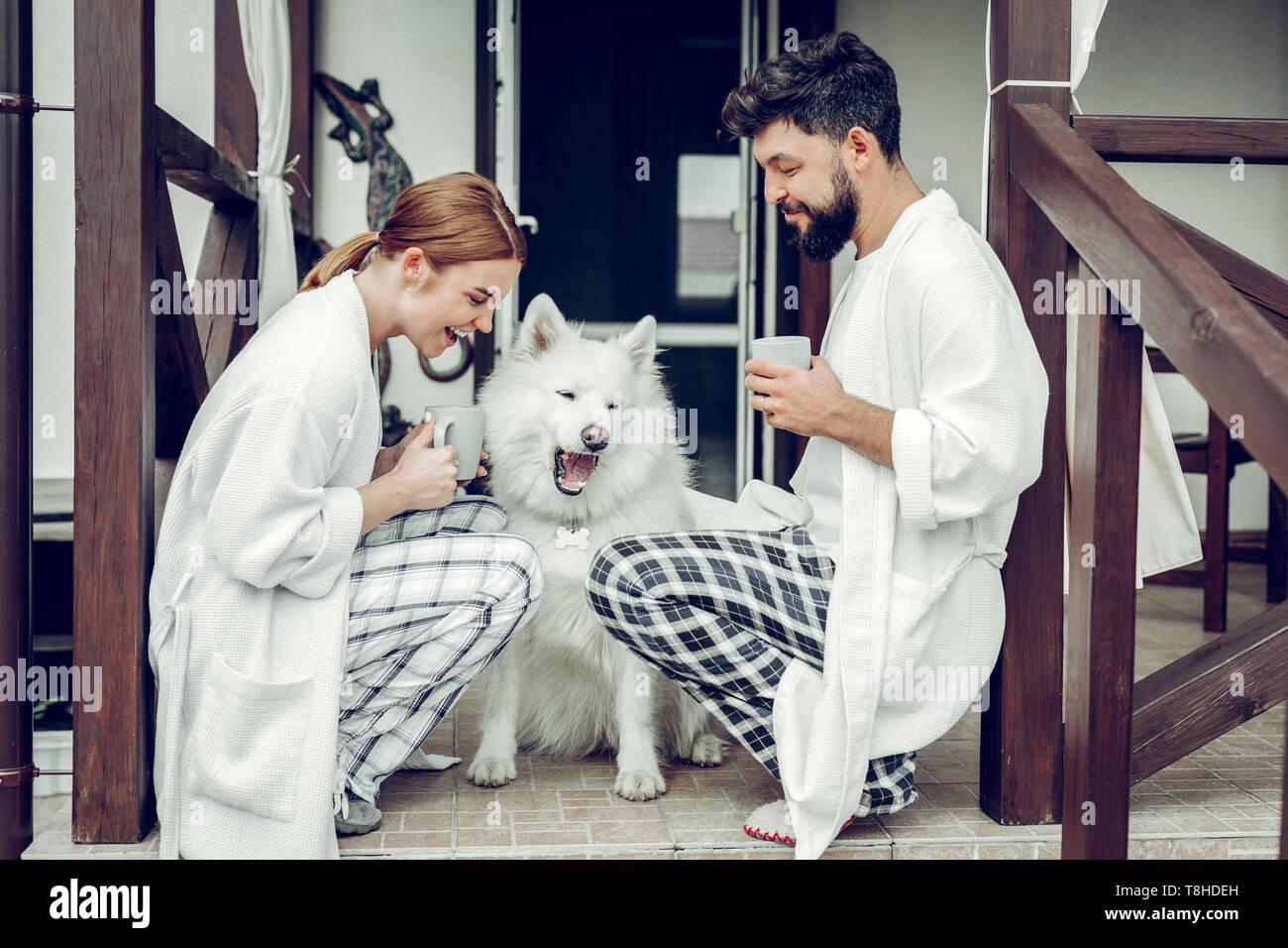 Glücklich liebende Familie teilen ein Lachen beim Sitzen mit samojeden. Stockbild