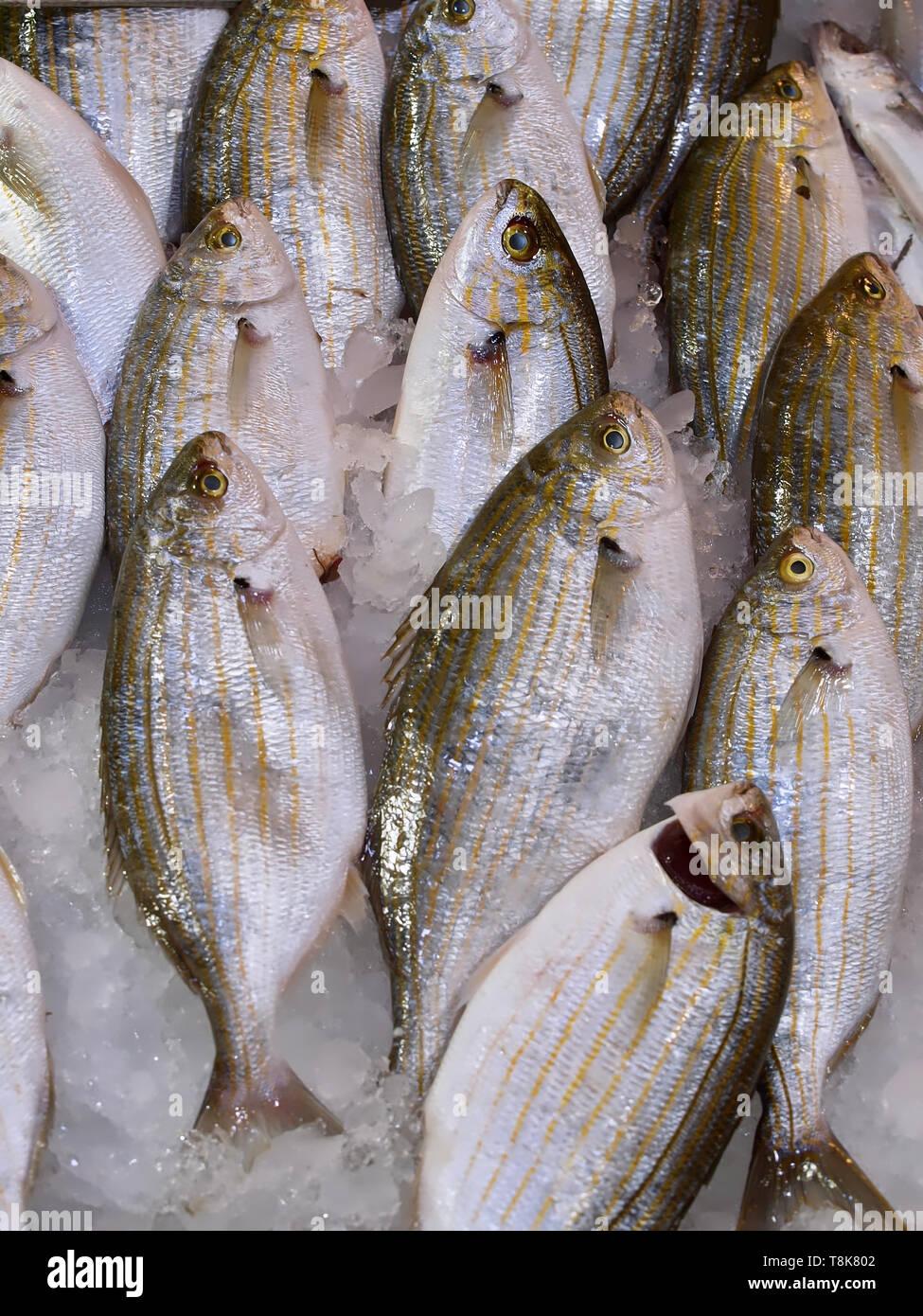 Ganz, frisch Fisch auf Eis an einem Lebensmittelmarkt Stockfoto