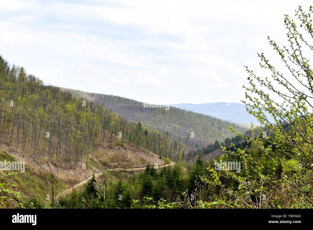 Grüne Laub- und Pine Tree Bergwald in Kroatien während der frühen Frühjahr Stockbild