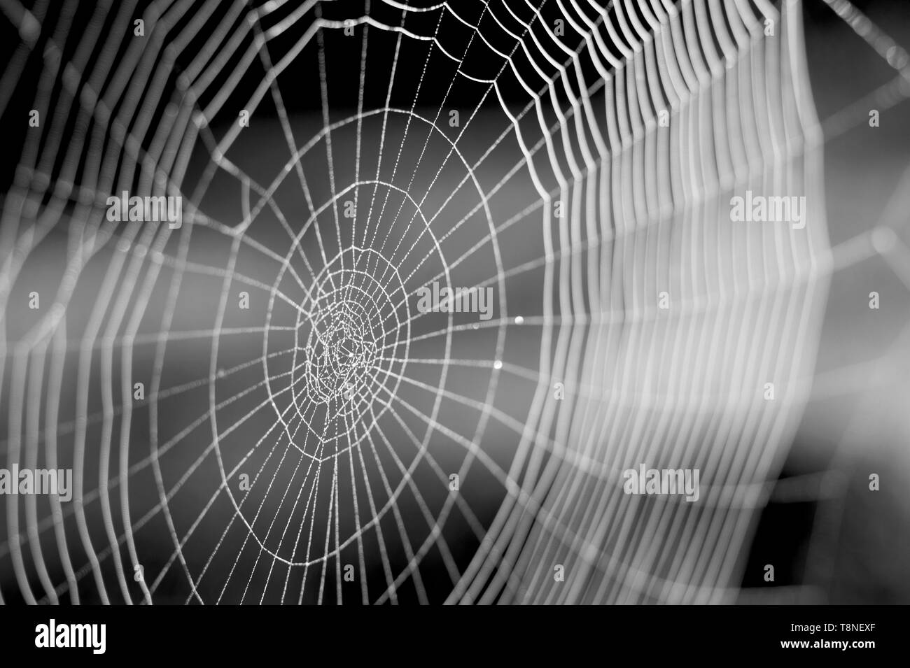 Web in Tautropfen close-up mit geringer Tiefenschärfe. Stockfoto