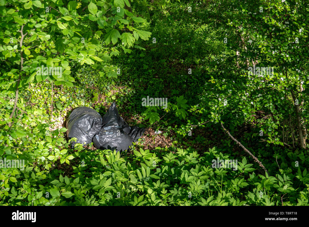 Müllsäcke liegen achtlos in den Wald geworfen Stockfoto
