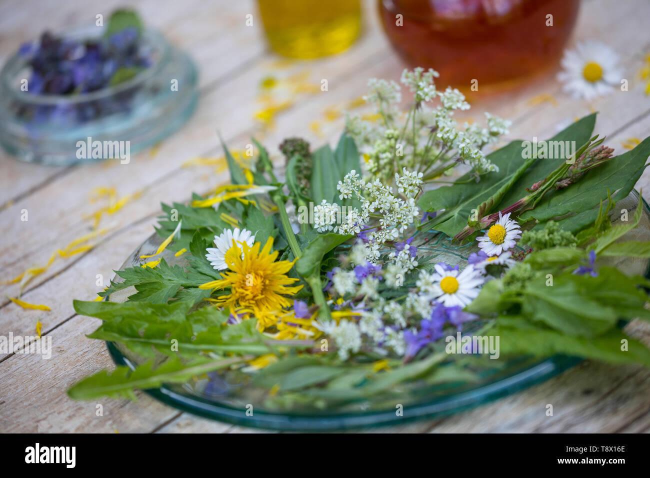 Frühlingssalat, Wildkräutersalat, Frühjahrssalat, Frühlings-Salat, Wildkräuter-Salat, Frühjahrs-Salat, Salat aus Wildkräutern, Kräutern, Salatteller, Stockbild