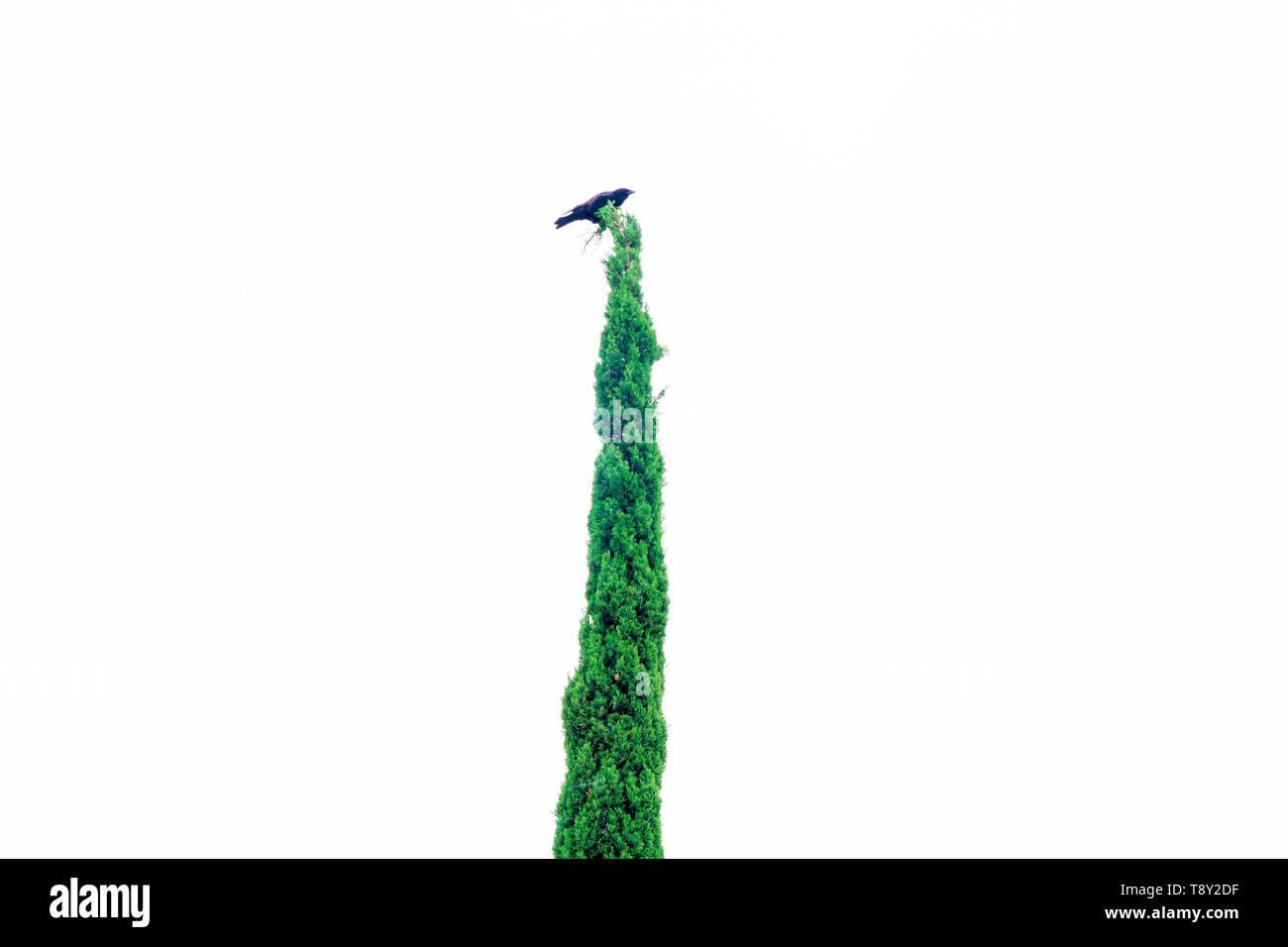 Was voran für Marihuana Konzept geschossen von Krähe saß auf einem Baum Stockbild