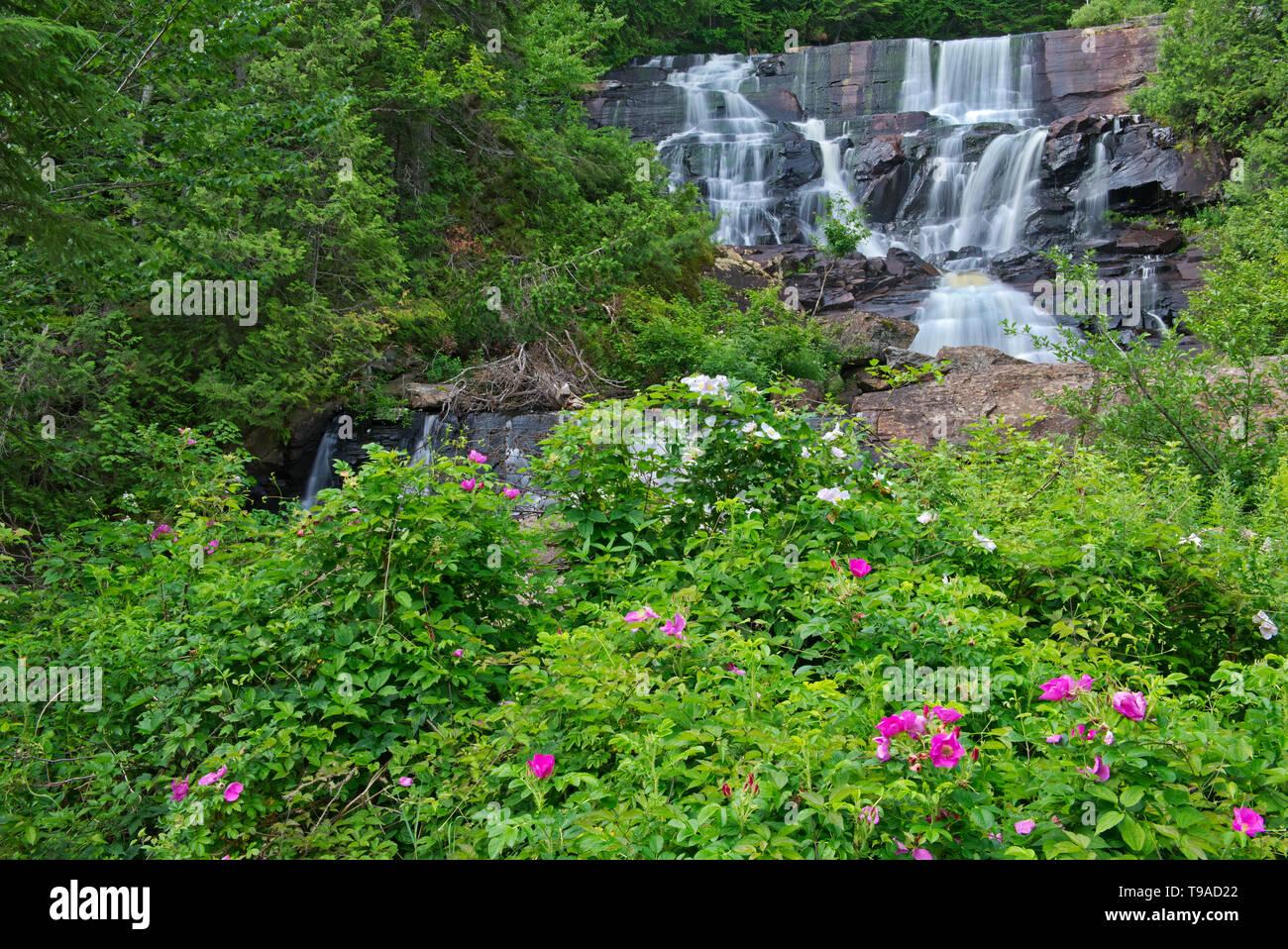 Rutsche aux Ratten Parc National du Mont Tremblant Quebec Kanada Stockbild