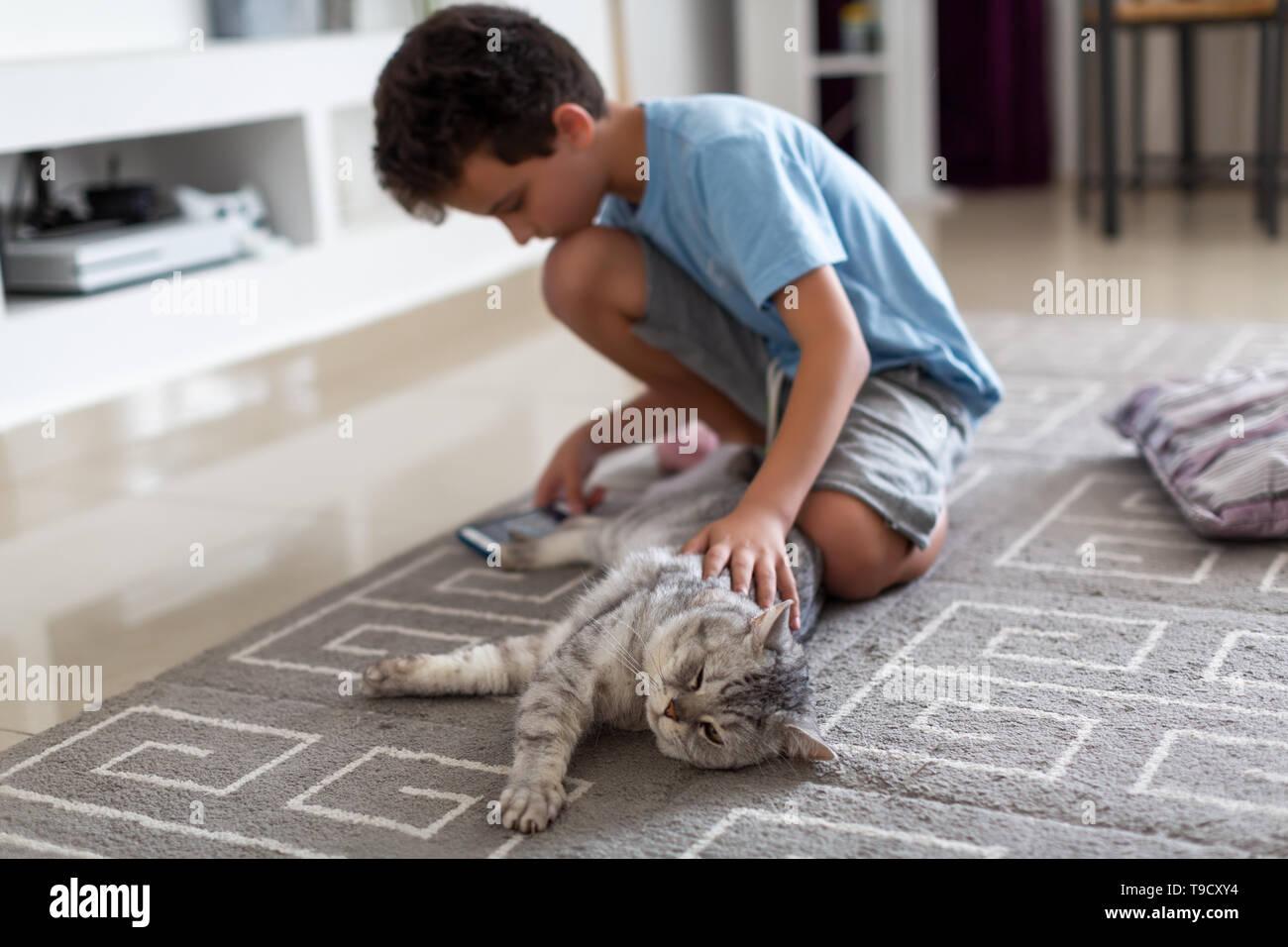 Junge Anschläge eine niedliche Britische Katze, sitzen auf dem Boden und spielen das Telefon Stockfoto