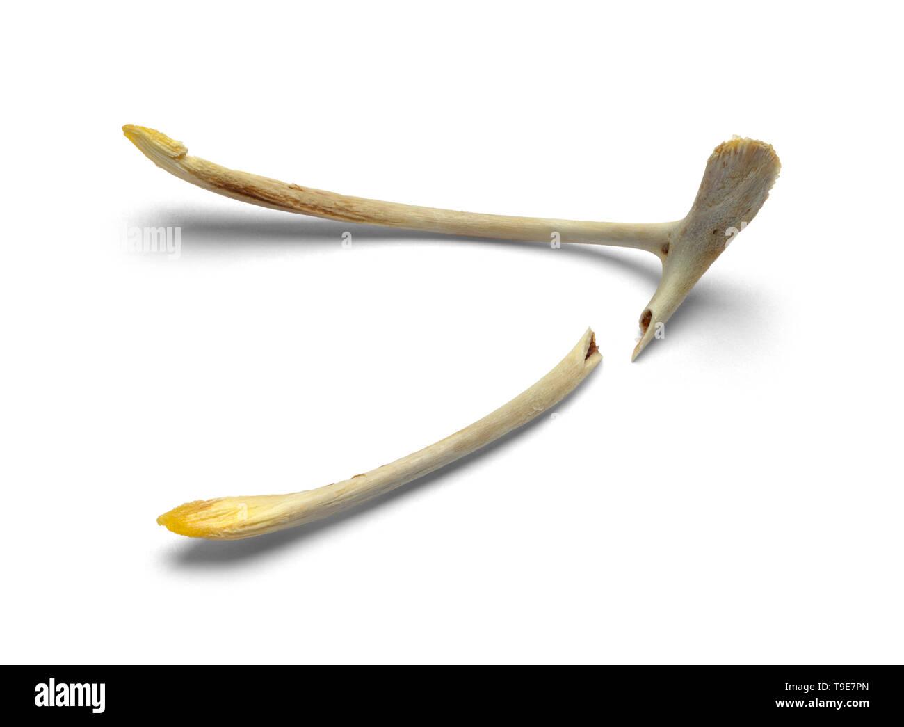 Gebrochene Huhn wollen Knochen isoliert auf weißem Hintergrund. Stockbild