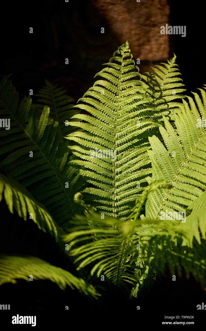 Im Wald durch hartes Licht beleuchtet Fern. Natur und Grün. Stockbild