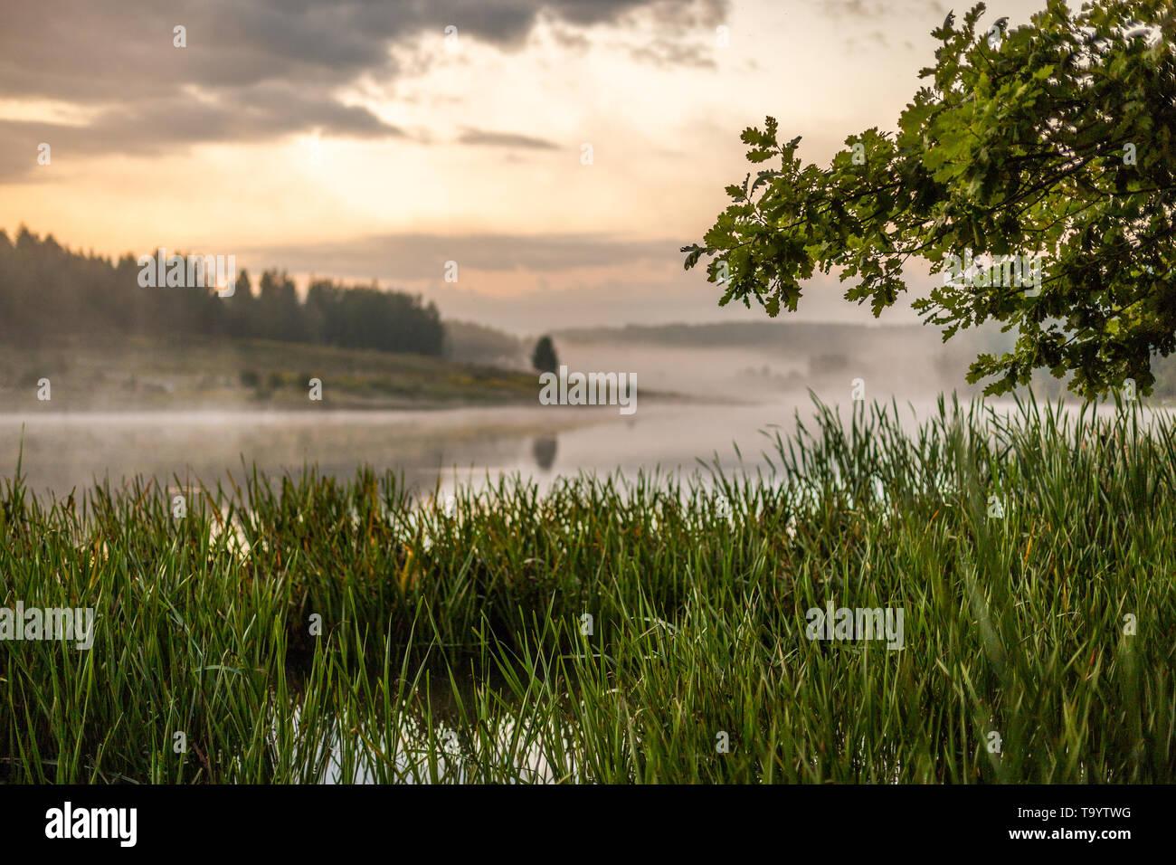 Morgen neblig Riverside view mit Eiche, reedmace Gras und selektiven Fokus mit einer geringen Tiefenschärfe in gedämpften Farben gamma. Stockbild