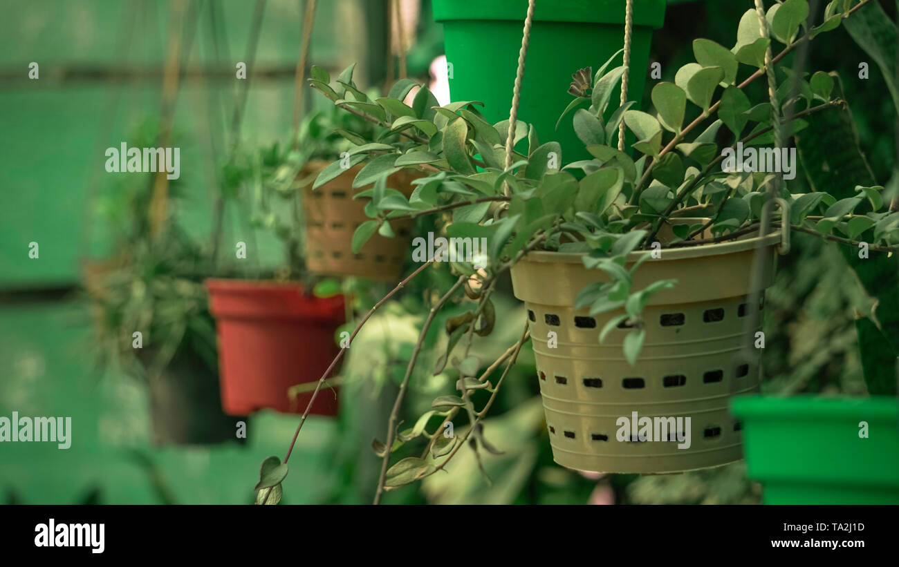Hangenden Blumentopf Stockfotos Und Bilder Kaufen Alamy