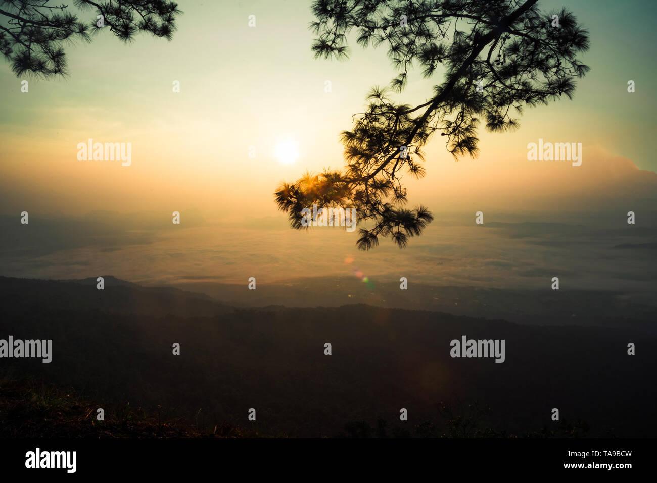 Sonnenuntergang oder Sunrise schönen warmen Himmel Top view Hill mountain Cliff und Zweig Pine Tree Landschaft mit Nebel Nebel Stockbild