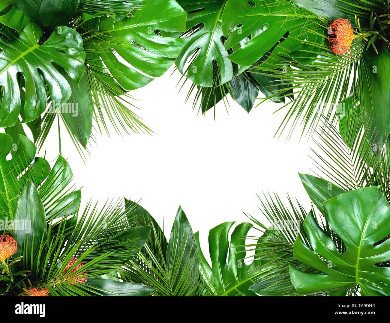 Nahaufnahme der Blumensträuße von verschiedenen frischen tropischen Blättern isoliert auf weißem Hintergrund. Design Template. Rahmen mit Kopie Platz für Text. Ansicht von oben, La Stockbild