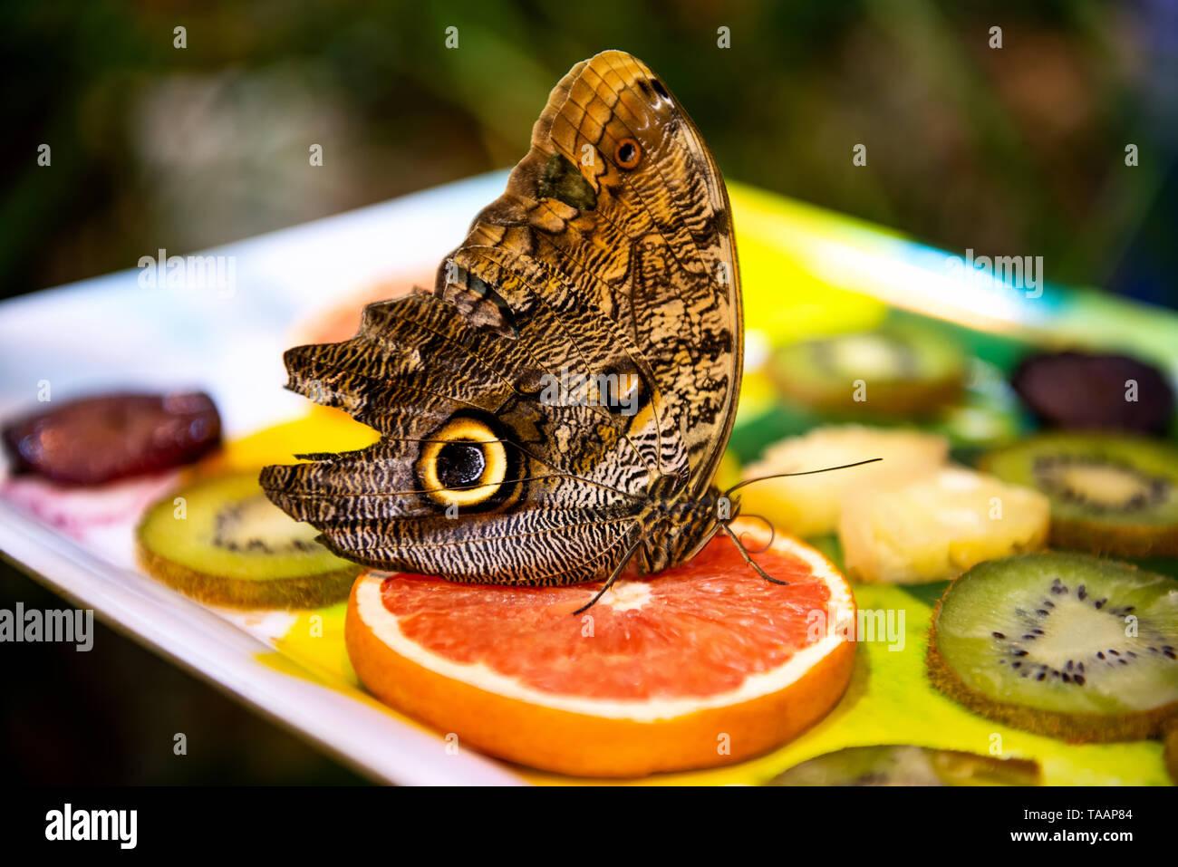 Schöner großer Schmetterling sitzt auf helle Früchte auf unscharfen Hintergrund Stockbild