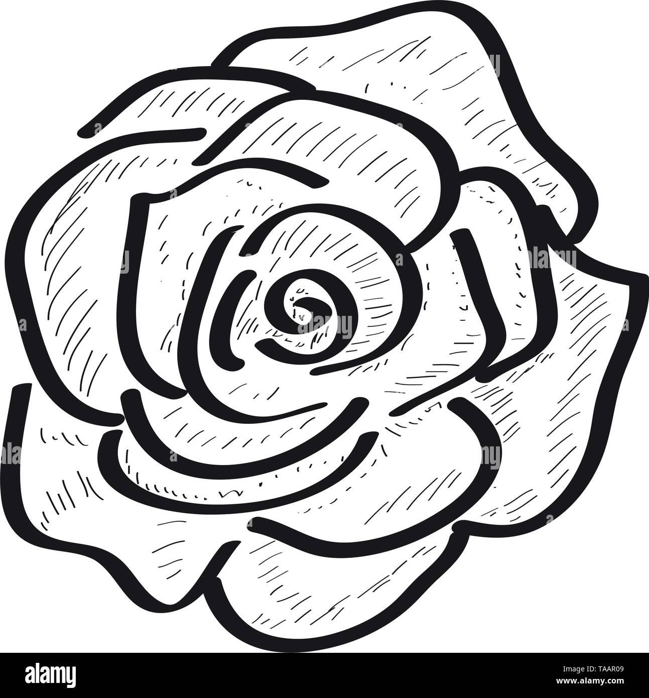 Isolierten Skizze einer Rose auf weißem Hintergrund Stockbild