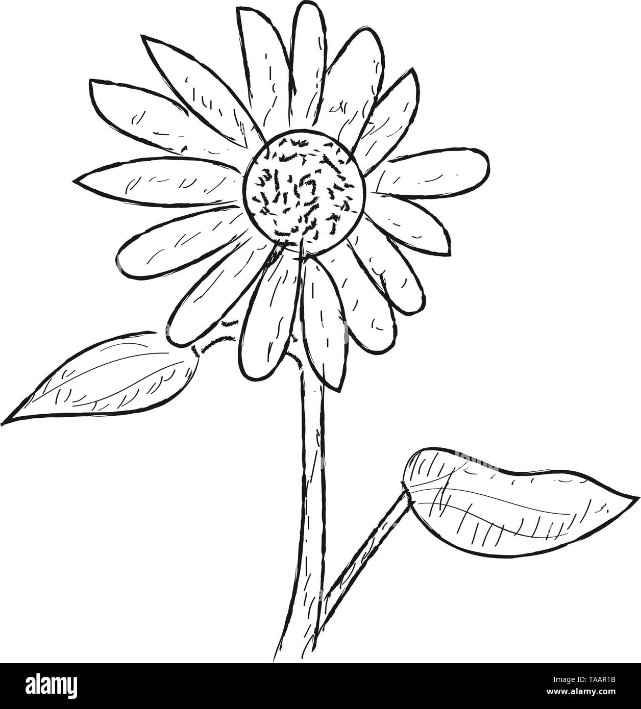 Isolierten Skizze einer Sonnenblume Stockbild