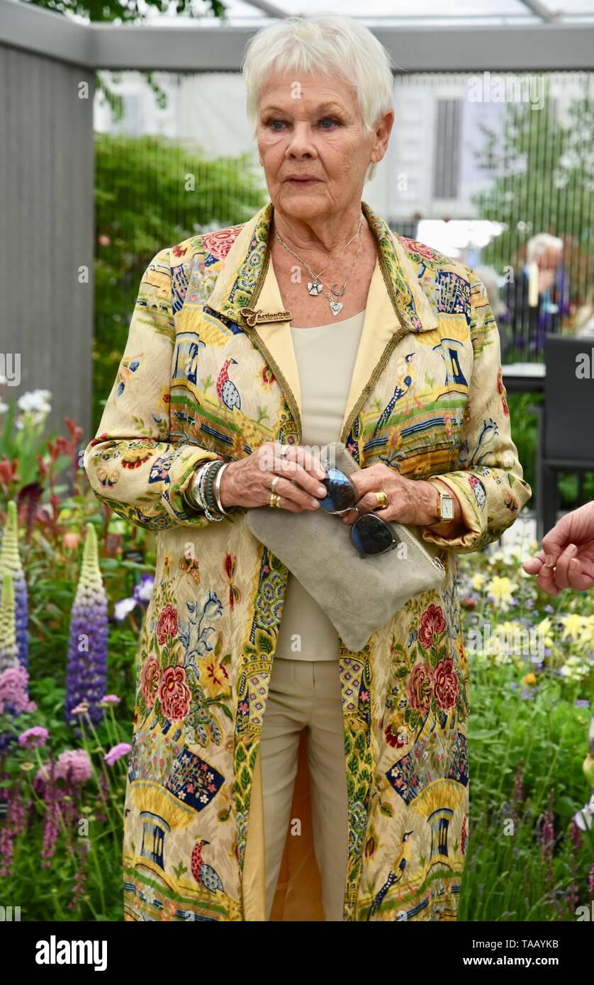 Dame Judi Dench wurde eine Baumkastelme überreicht, um die Wiedererlöung der britischen Landschaft ab diesem Jahr zu starten. Hillier Nurseries, RHS Chelsea Flower Show, Royal Hospital, London. GROSSBRITANNIEN Stockfoto