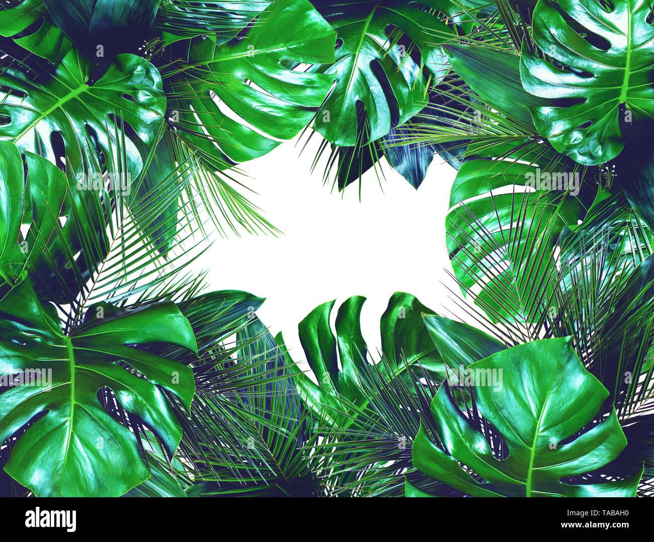 Nahaufnahme der Blumensträuße in verschiedenen dunklen Grün frische tropische Blätter auf weißem Hintergrund. Design Template. Rahmen mit Kopie Platz für Text. Top vi. Stockbild