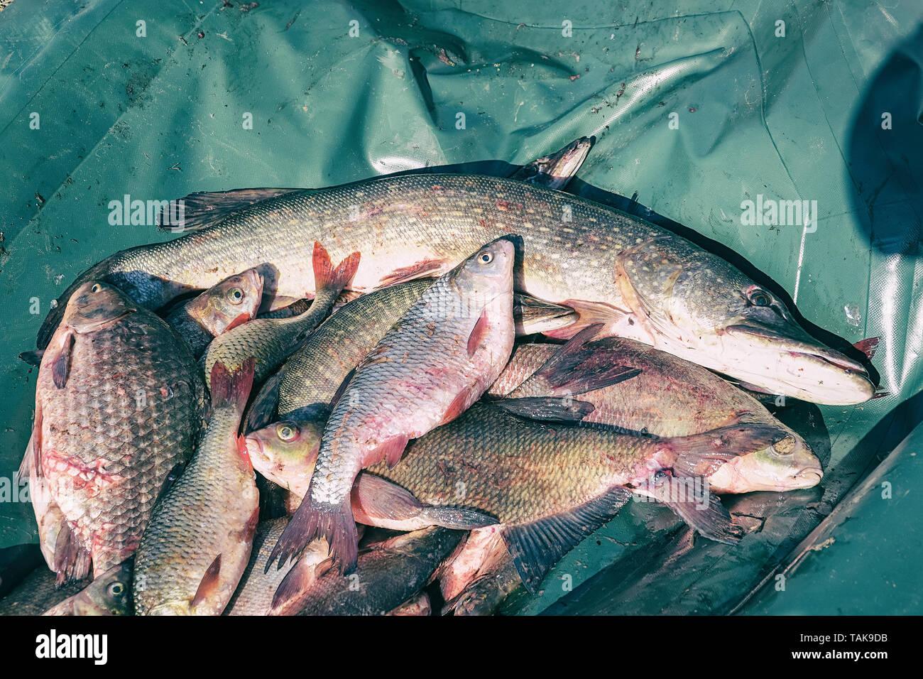 Viele Fische Dating-Seite uk
