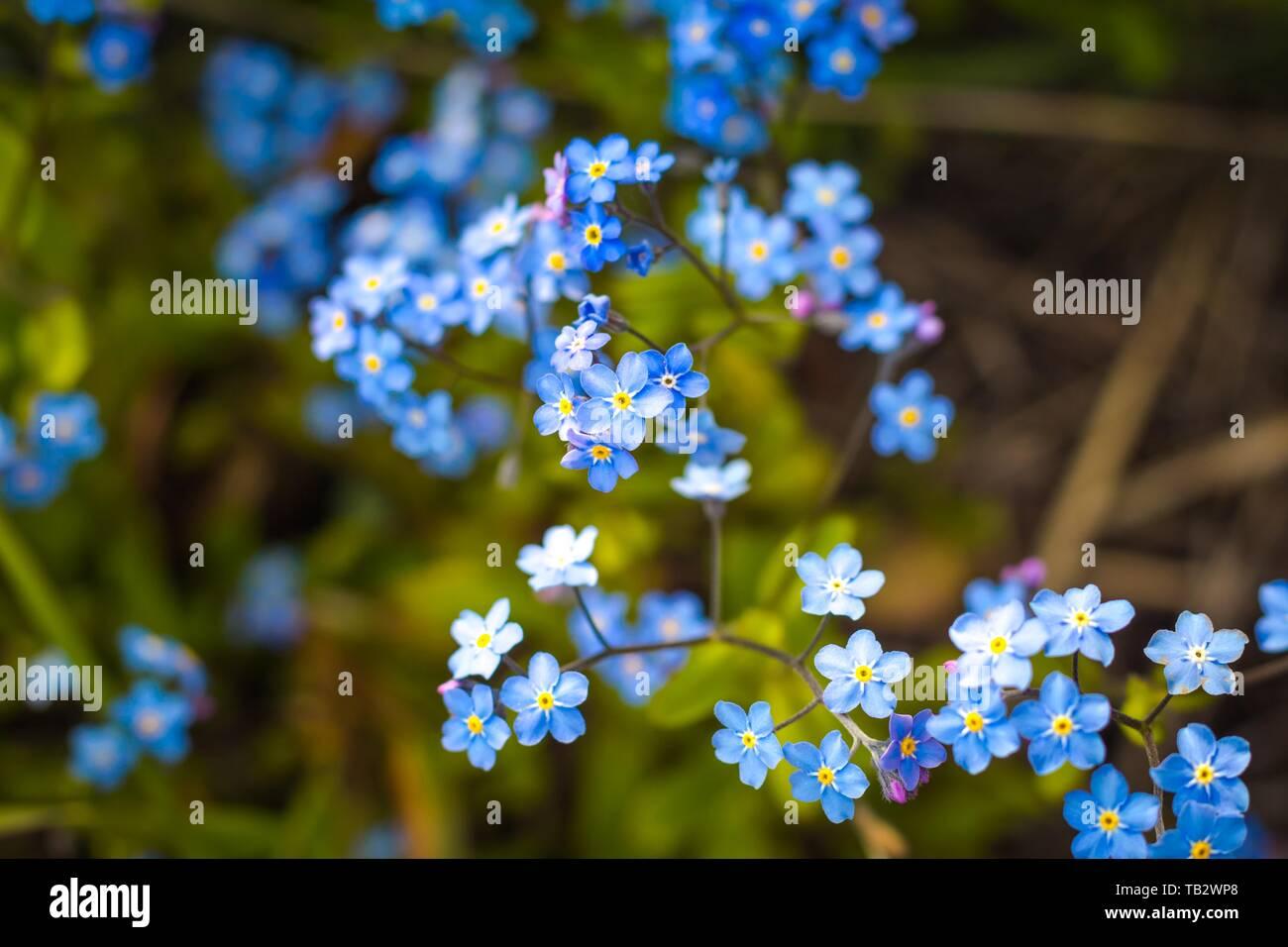 Viele Farben Blau Schatten Wachsen In Einem Schonen