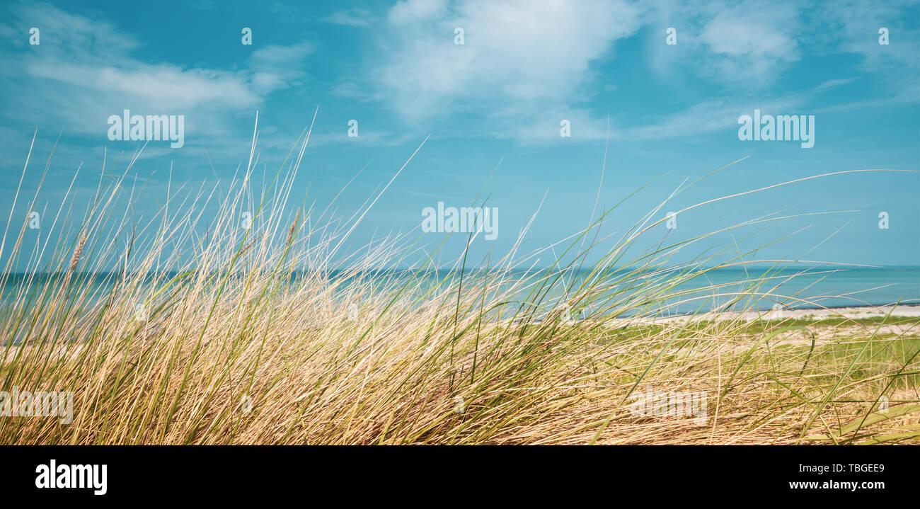Ein Panorama Bild von der Strand der Ostsee im Sommer mit dune Grass in den Vordergrund und blaues Meer Wasser in den Hintergrund und den blauen Himmel in der Stockbild