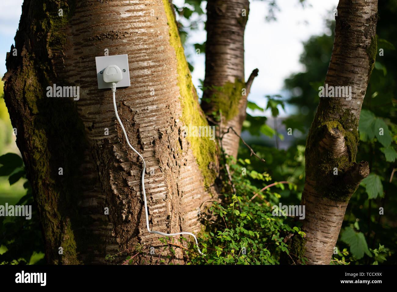 UK Stecker in eine Steckdose in einem Baum. Ökologische Konzept, Symbol für erneuerbare Energie, Bioenergie Stockfoto