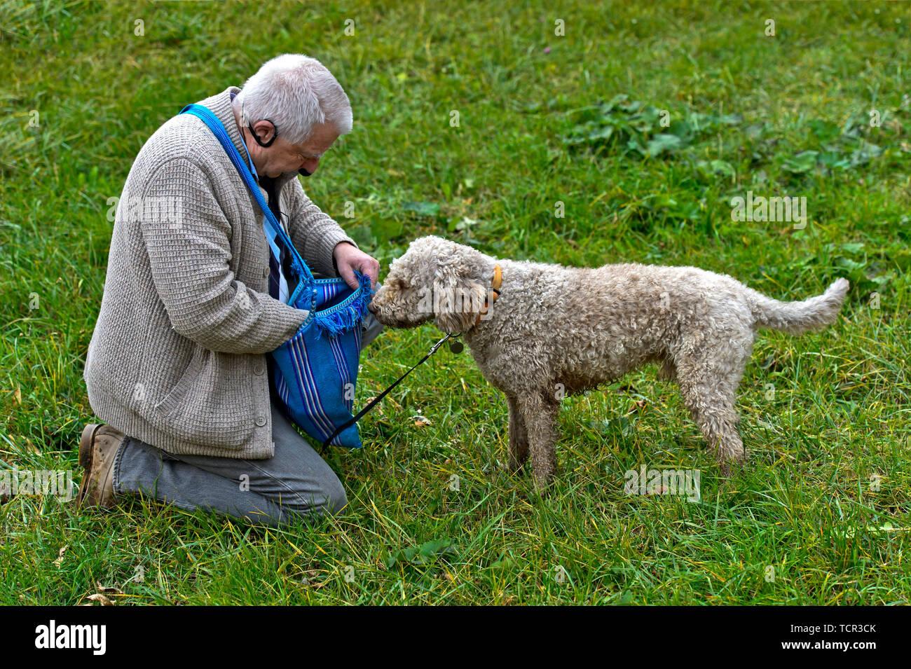 Romagna Wasserhund Stockfotos Und Bilder Kaufen Alamy