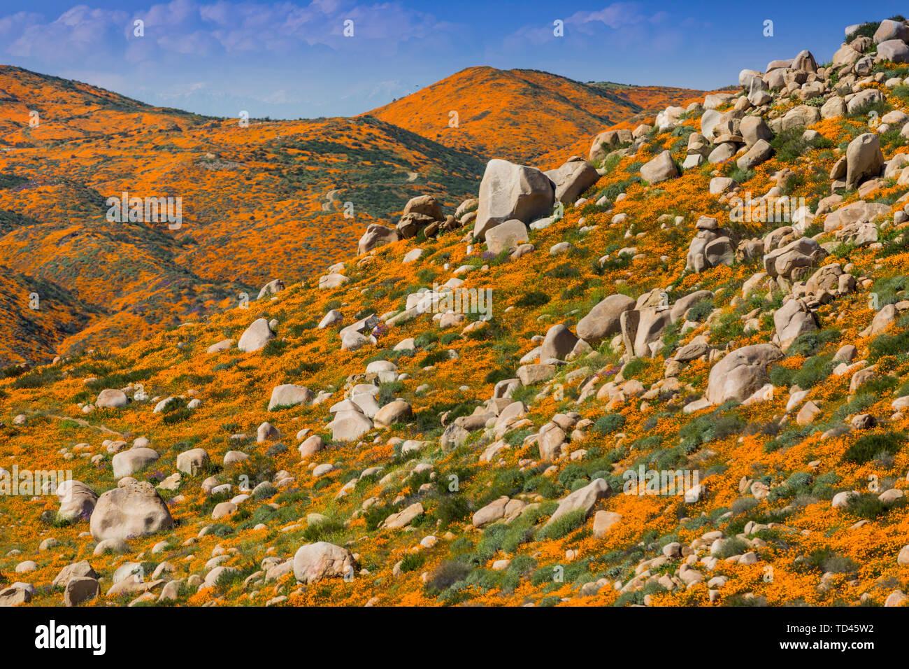 Kalifornien Superbloom, die mohnfelder von Lake Elsinore, Kalifornien, Vereinigte Staaten von Amerika, Nordamerika Stockfoto