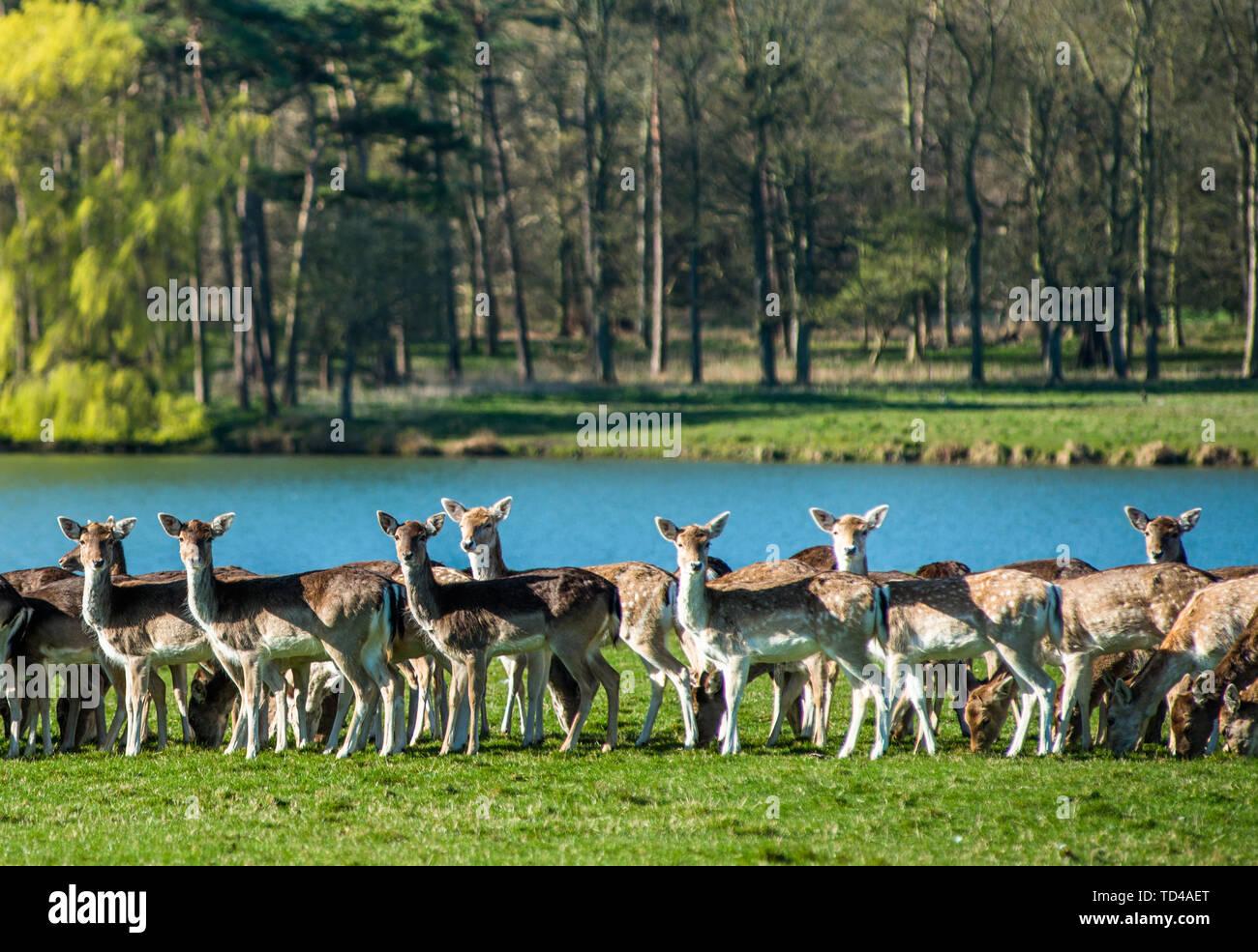 Brachland in der Nähe des Sees bei Holkham Park, in der Nähe der Küste von Norfolk, Norfolk, East Anglia, England, Vereinigtes Königreich, Europa Stockfoto