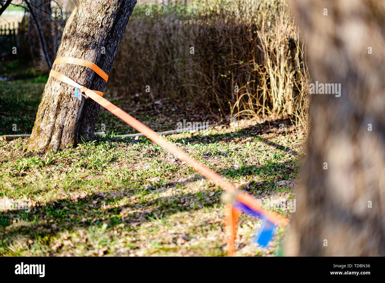 Strope für Kabel gehen zwischen den Bäumen im Garten gestreckt Stockbild