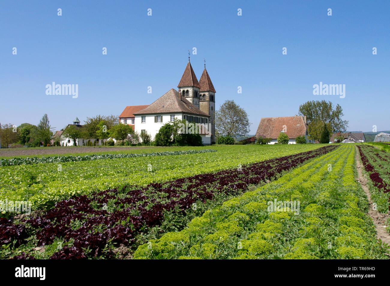 Salat Feld auf der Insel Reichenau, Deutschland, Baden-Wuerttemberg, Reichenau Stockbild