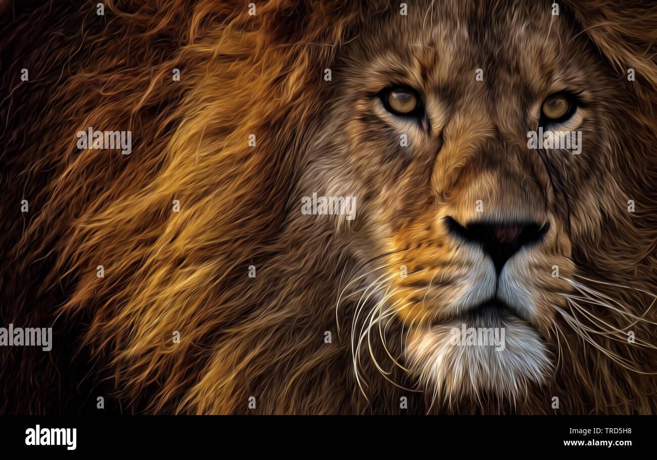 Lion König der Tiere, Wild & Tiere Stockbild
