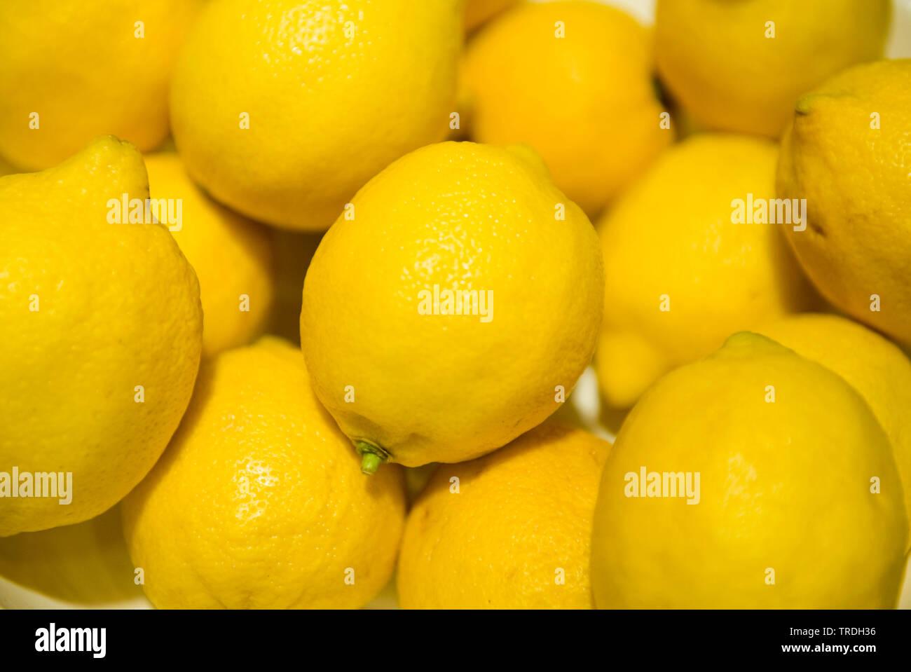 Zitrone (Citrus limon), viele reife Zitronen | Zitrone (Citrus limon), viele reife Zitronen | BLWS 503756.jpg [(c) Blickwinkel/McPHOTO/M. Begsteiger Tel. +4 Stockbild