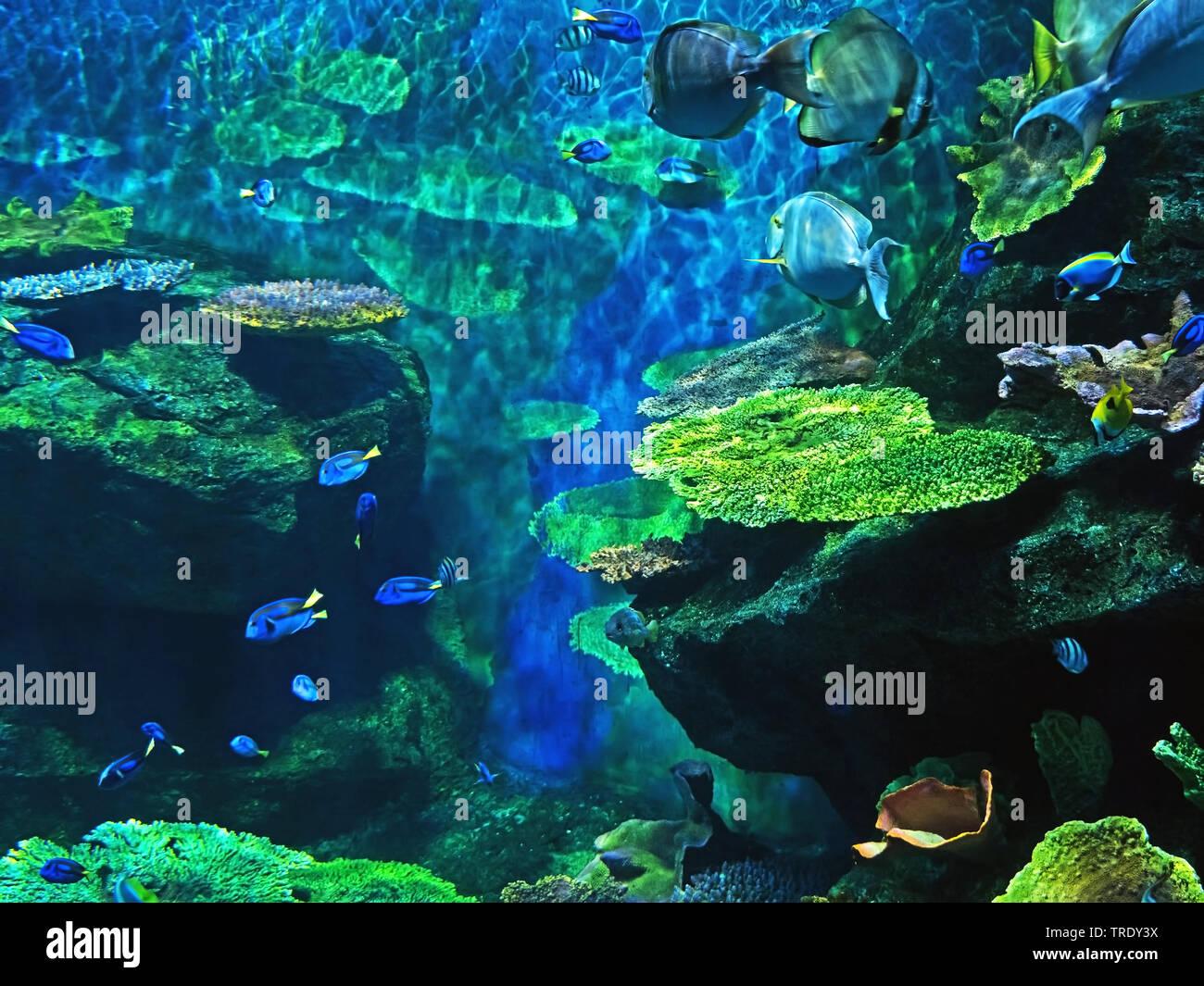Closeup schöne Szene von Unterseeischen Korallenriff mit Seefisch Stockfoto
