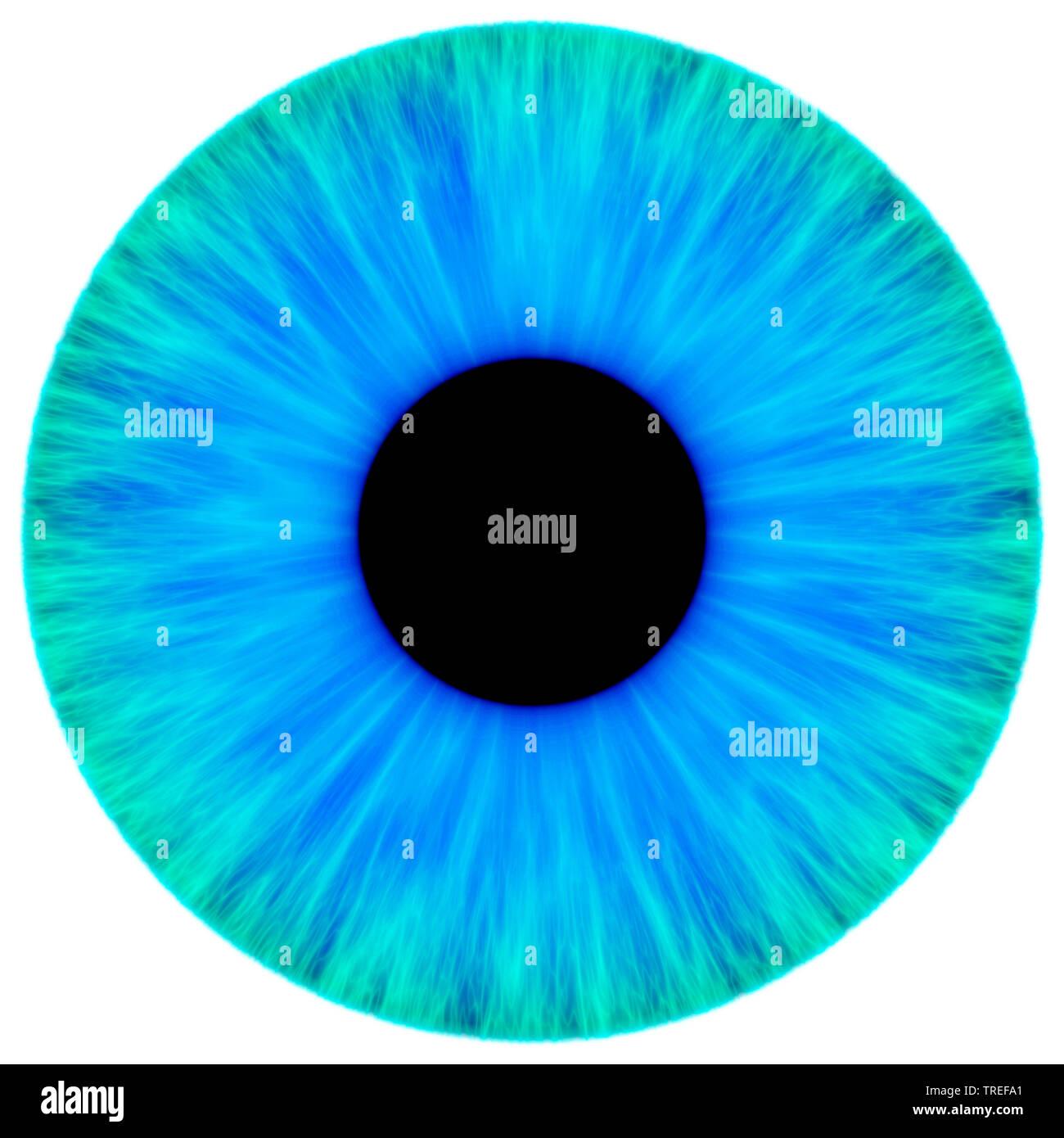 Computergrafik, blau-gruenen Iris vor weissem Hintergrund | Computer Graphics, bluegreen Iris gegen weiße Hintergrund | BLWS 525164.jpg [(c) blickwink Stockbild