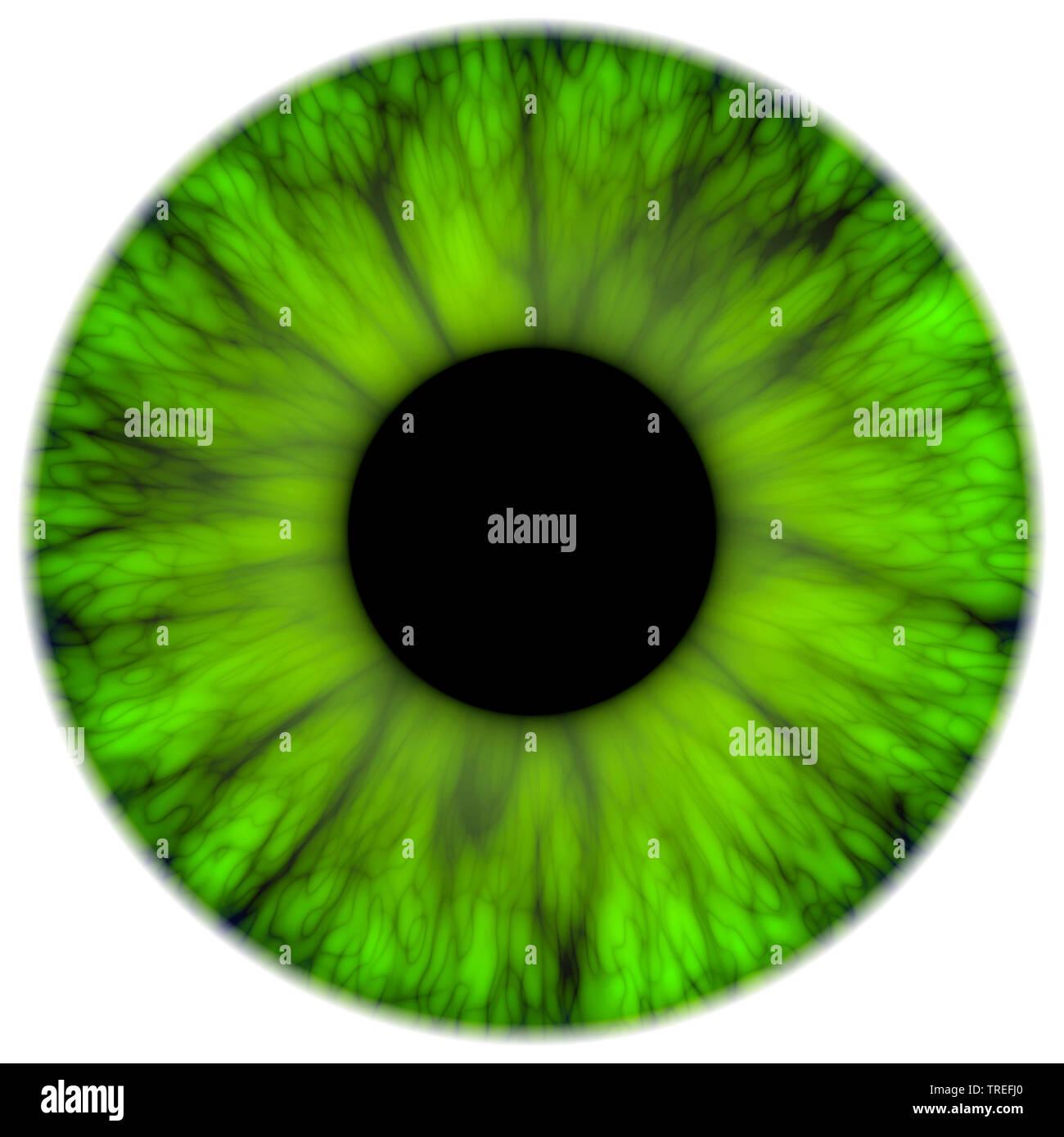 Computergrafik, gruene Iris vor weissem Hintergrund | Computer Graphics, grün Iris gegen weiße Hintergrund | BLWS 525383.jpg [(c) Blickwinkel/McPHOT Stockbild