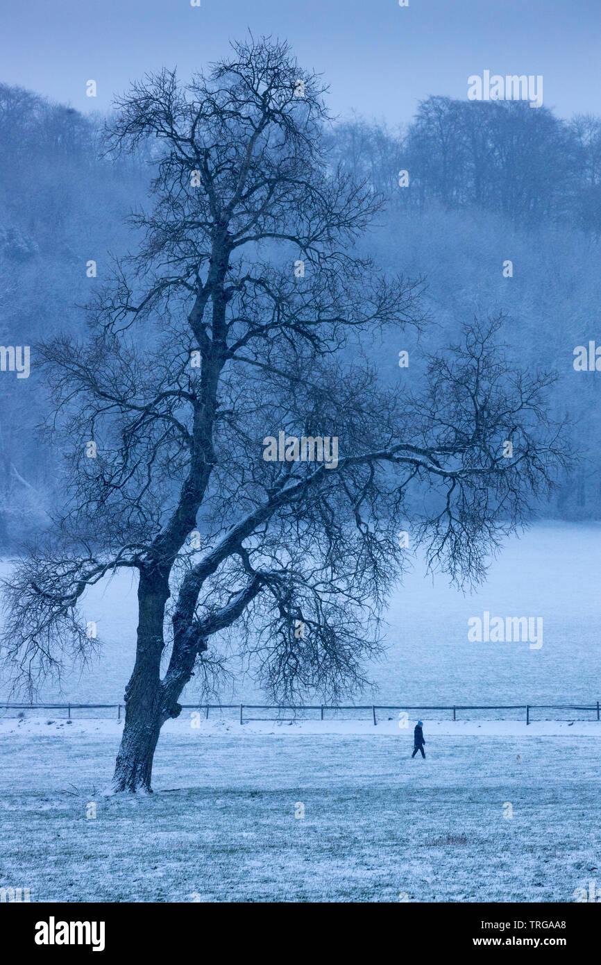 Eine Person, die ihren Hund im Schnee, Venn Farm, milborne Port, Somerset, England, Großbritannien Stockfoto