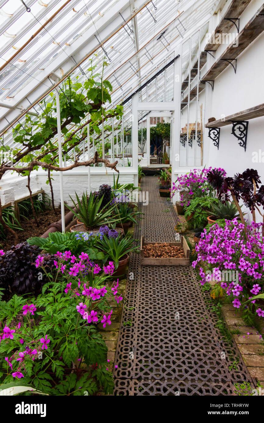 Innenraum eines ummauerten Garten Gewächshäuser an der Verlorenen Gärten von Heligan, Cornwall, Großbritannien Stockbild