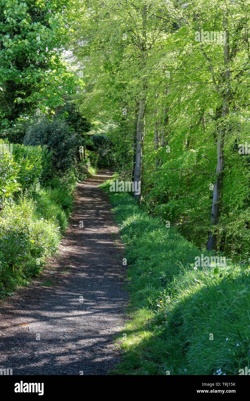 Lange woodland Pfad ohne Menschen wie Frühlingssonne scheint durch die frischen Frühling Laub auf den Bäumen am Rande des Weges. Stockbild