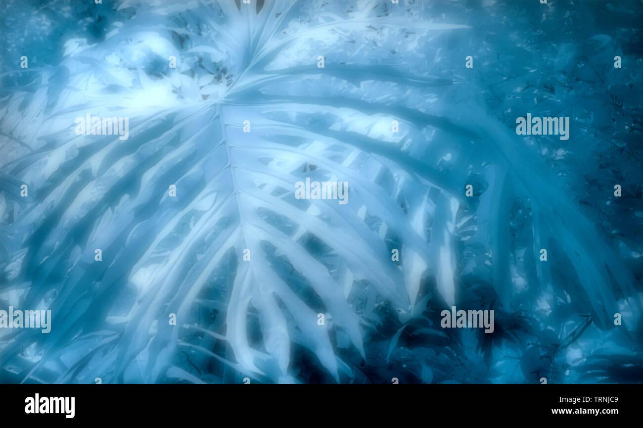 Infrarotbild - Blätter der Dschungel Pflanzen - Botanischer Garten Stockbild