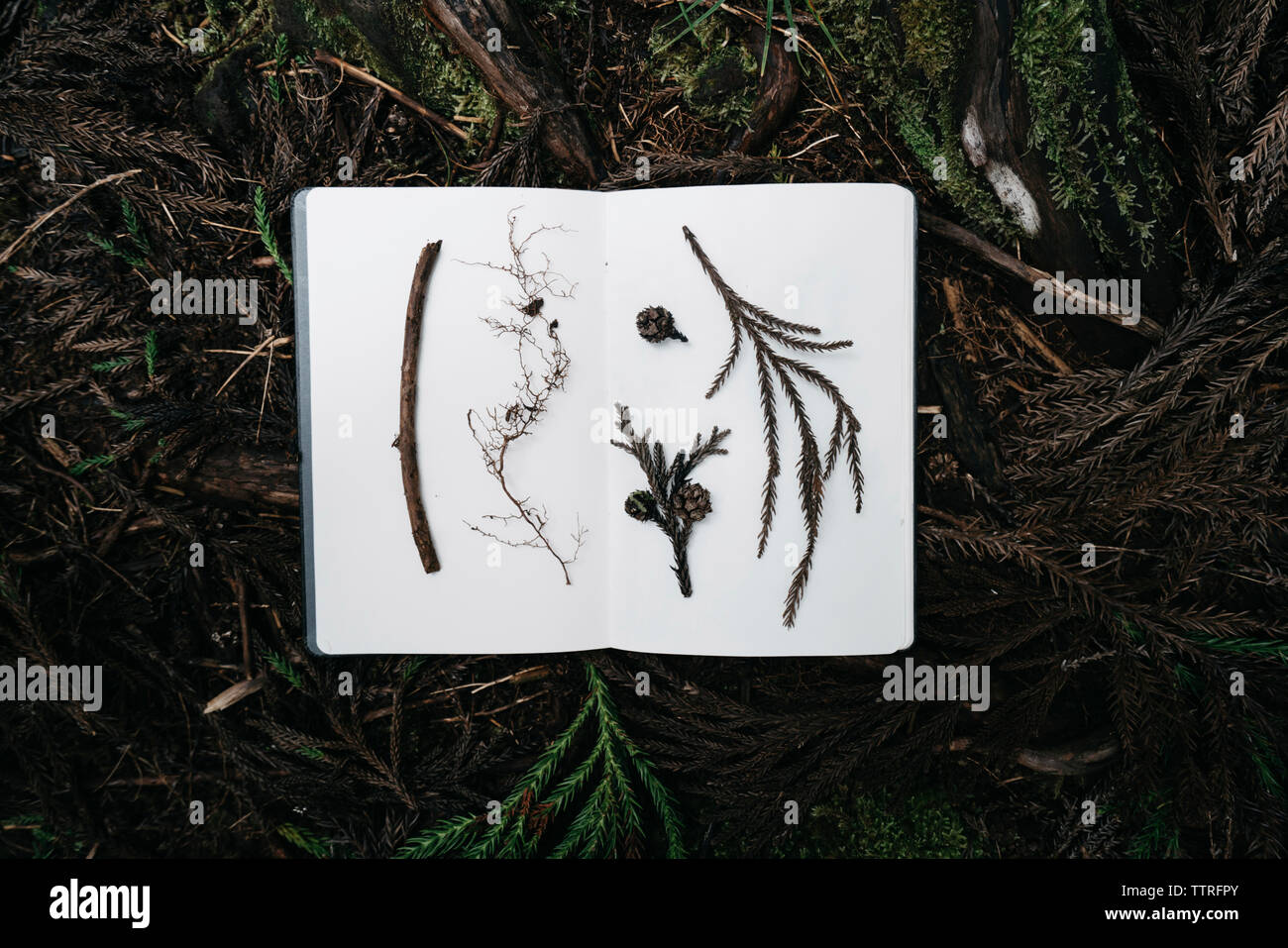 Close-up Buch mit verschiedenen Blätter auf Äste im Wald Stockbild