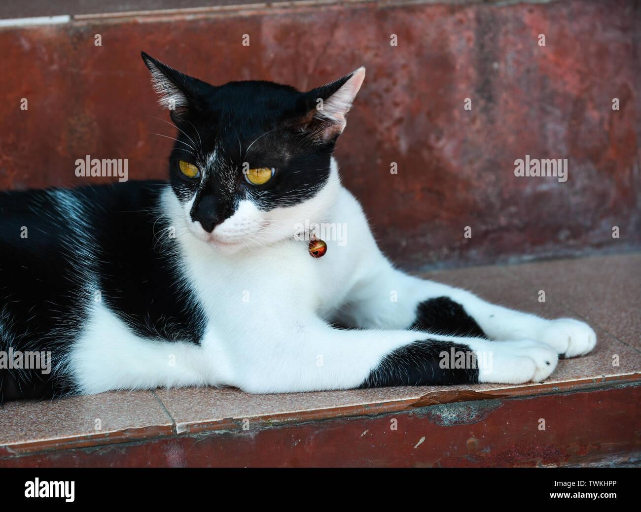 Schöne Katze auf dem Boden an der ländlichen Haus in Phuket, Thailand. Stockbild