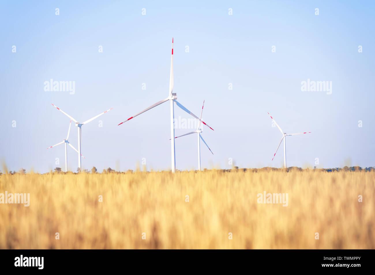 Windpark in der goldene Weizen Feld. Helle Sommer Landschaft Stockfoto