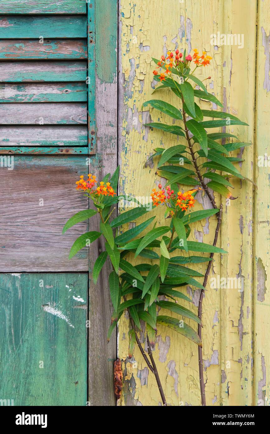 Abgeplatzte Farbe in New Orleans, Louisiana. Stockbild