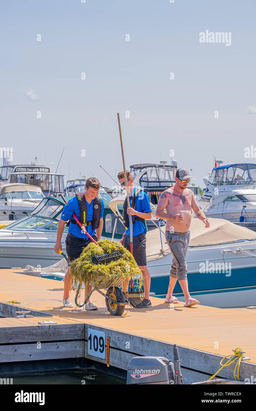 Arbeitnehmer klare Unkraut aus rund um den Bootsanleger im Hafen von Orillia Ontario von Hand Propeller von verschmutzt zu verhindern.. Stockfoto