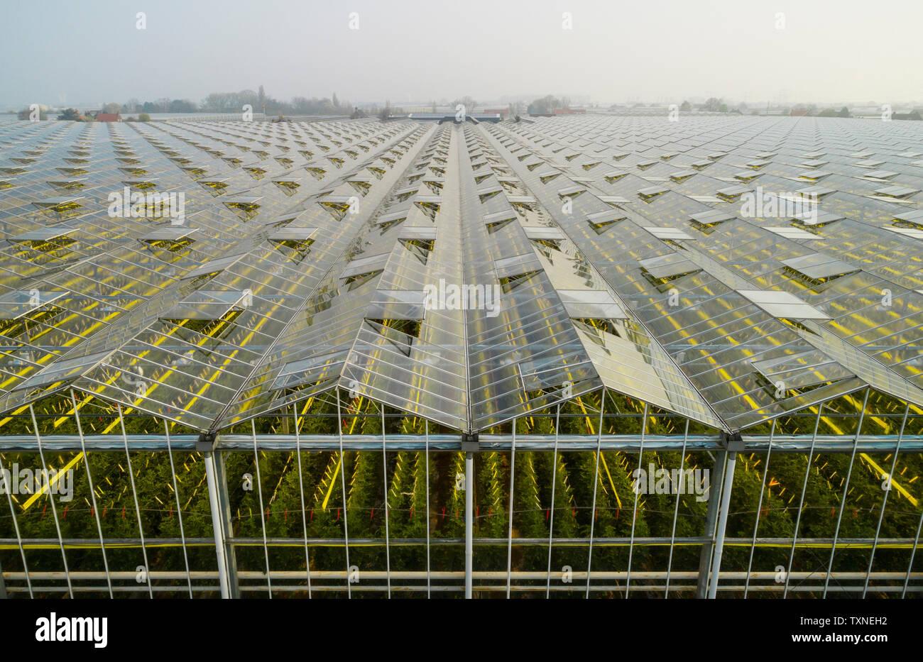 Gewächshaus in den Westland, Teil der Niederlande mit großer Konzentration von Gewächshäusern, Erhöhte Ansicht, Maasdijk, Zuid-Holland, Niederlande Stockbild