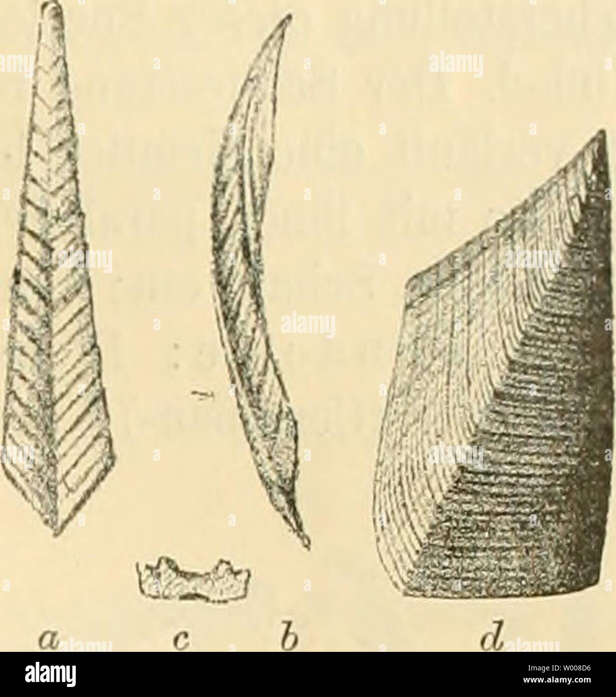 Archiv Bild von Seite 14 der Sterben der crustaceen bhmischen kreideformation. Der crustaceen bÂhmischen kreideformation diecrustaceender 00 Fria sterben jedes Jahr: 1887 Familie Lepadidae. Abbildung 3. Scaipellum quadratutn, Darw. a (Katze - ina von Kamajk l'mal ver-grössert, ein von Ihr Browser kann leider keine eingebetteten Frames anzeigen, h von d. Seite, c Querschnitt, d Scutum von Lan 4 mal vergrössert. Stockfoto