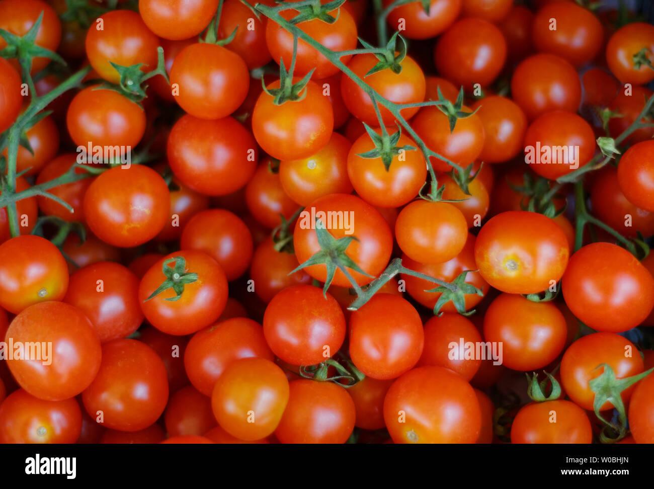 Baby Tomaten am Rebstock Stockbild