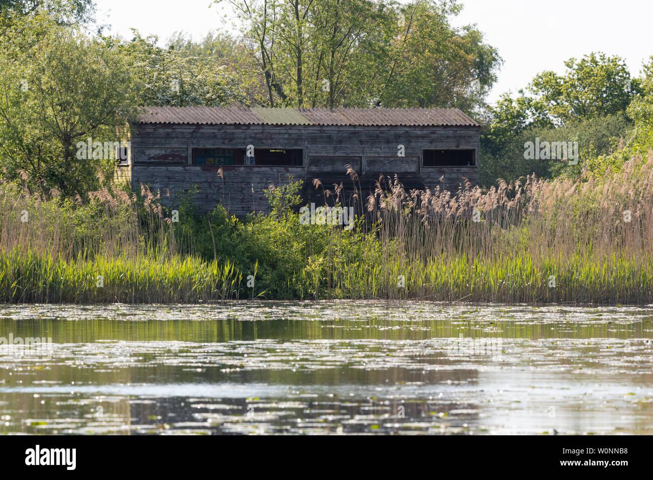 RSPB Vogel verbergen, Rockland Sümpfe Naturschutzgebiet, Rockland Breite, Norfolk, England, Großbritannien Stockbild