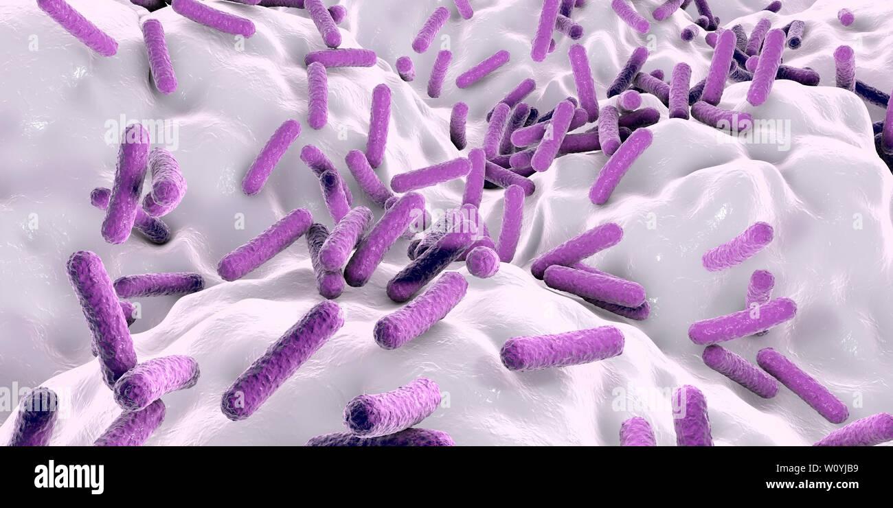 Fecalibacterium prausnitzii Bakterien, Abbildung Stockfoto