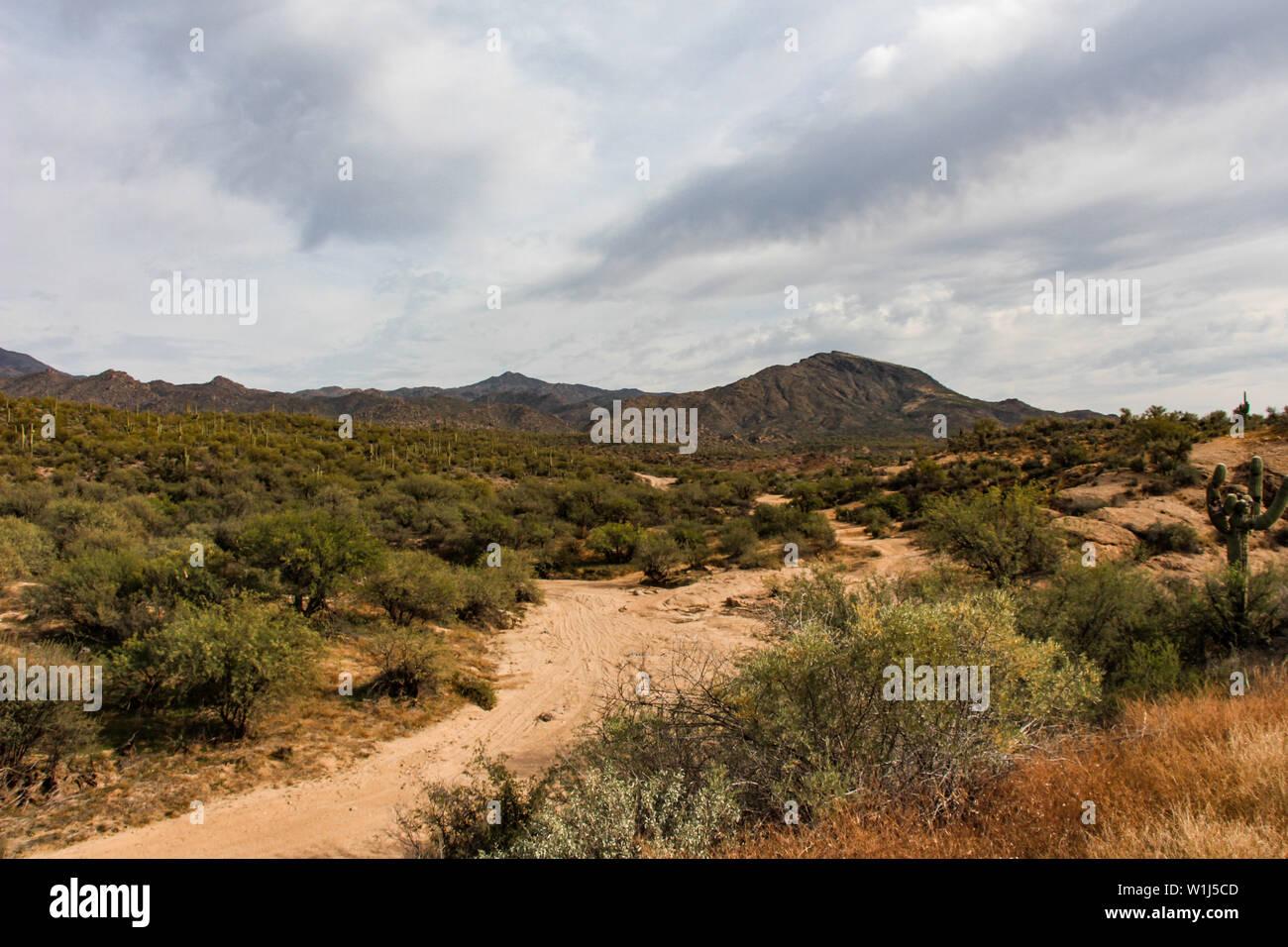 Trocken Waschen im Tonto National Forest in der Nähe von Fountain Hills Arizona Stockfoto